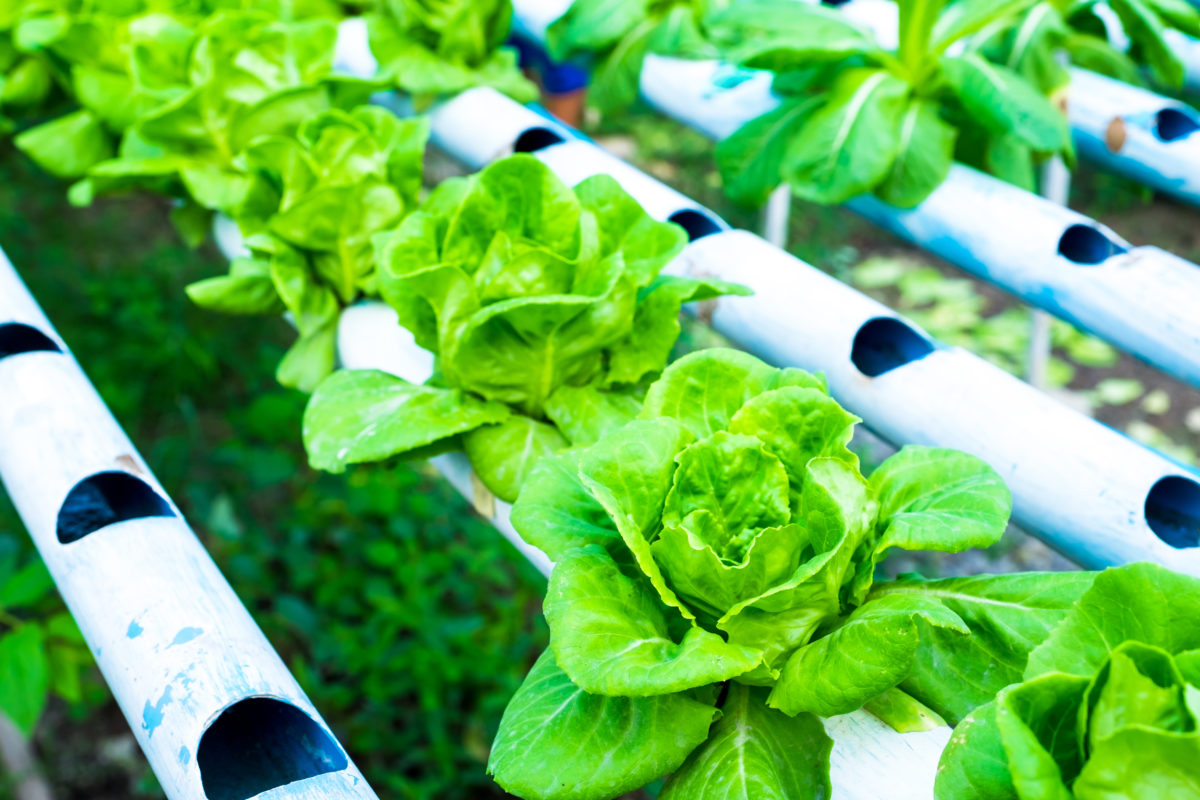 Vertical Farming Benefits and Technology