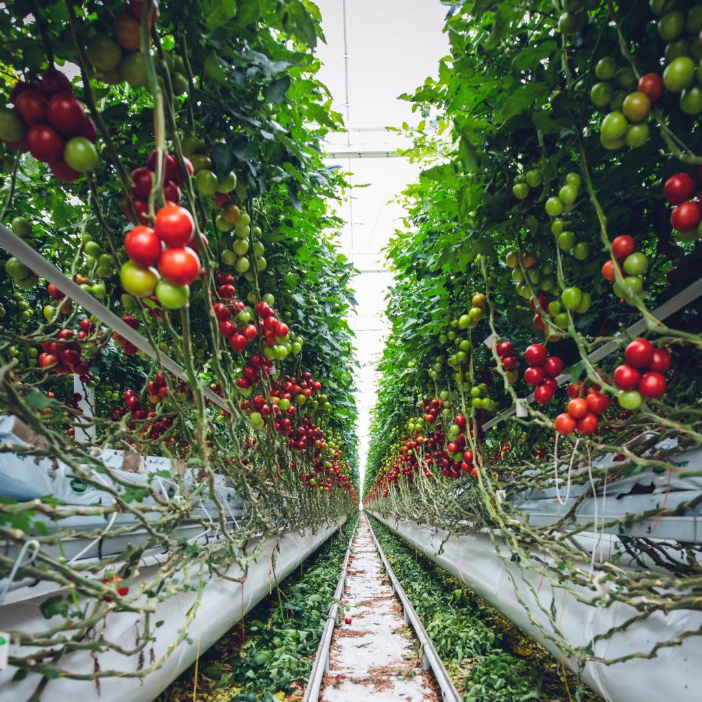 vertical farming technology