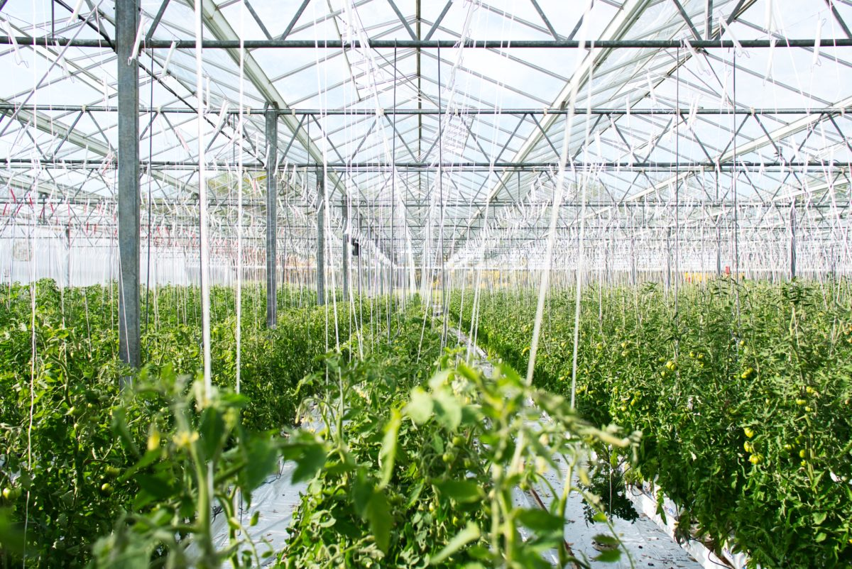 How Robotics and Automation Will Change The Horticulture Industry in 2020