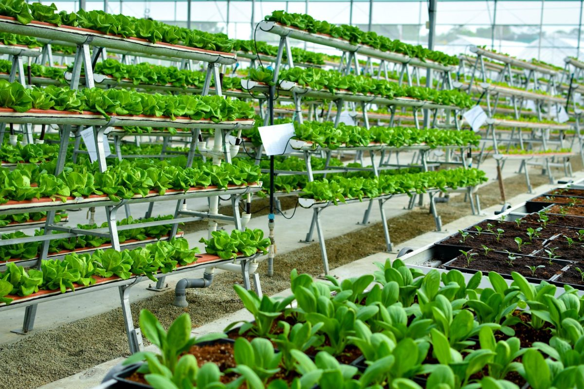 Vertical Farming Systems Technology